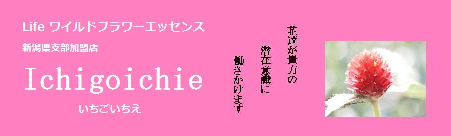 Life ワイルドフラワーエッセンス|IchigoIchie